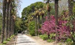 Красоты Никитского ботанического сада