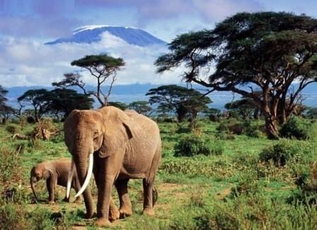 путешествие в Африку
