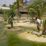 Австралийский парк крокодилов