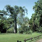 Ботанический сад Джорджа Брауна в Австралии
