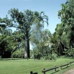 Ботанический сад Джорджа Брауна