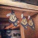 В Харабакоа можно посетить ферму по разведению бабочек