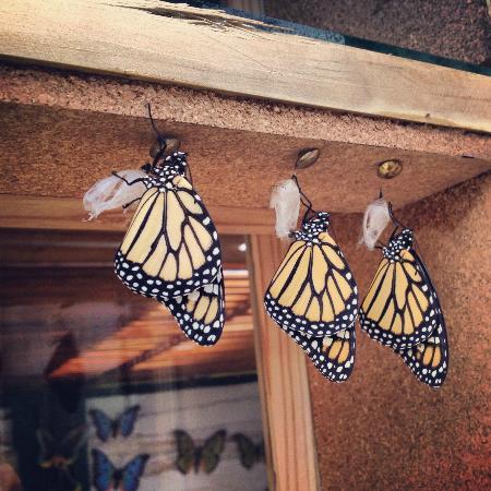 ферма по разведению бабочек
