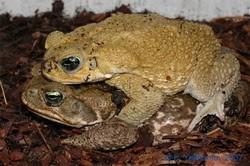 На что надулась жаба?