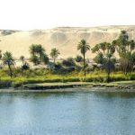 По Нилу плывут и островки из высоких кустов амбеча