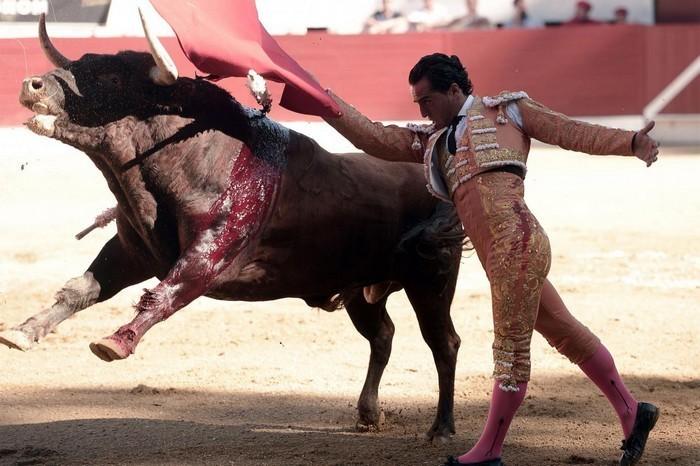 Схватка с быками