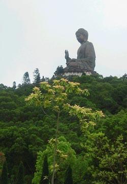 Огромный бронзовый Будда
